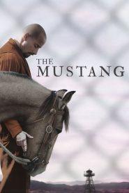 Ver Mustang: La rehabilitación