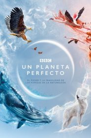 Ver A Perfect Planet