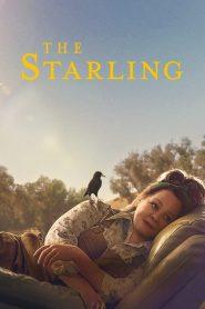 Ver El estornino (The Starling)
