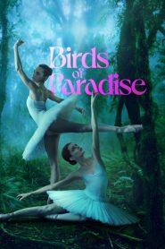 Ver Aves del paraíso (Birds of Paradise)